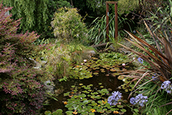 pond_abundant_250